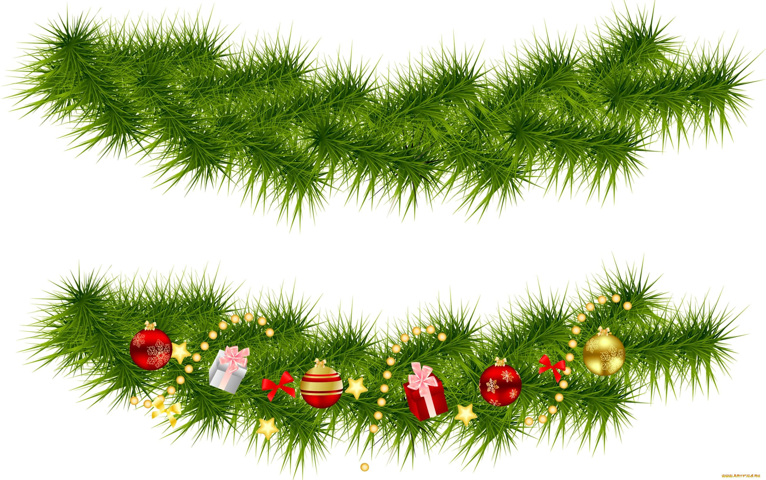 носить картинки веточки ели новогодние без фона занимаются